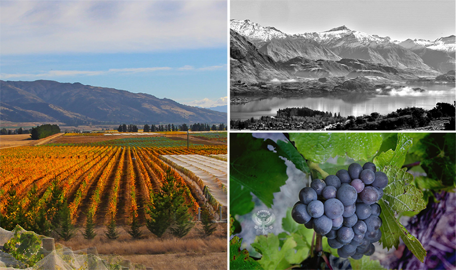kalex-wine-story-image