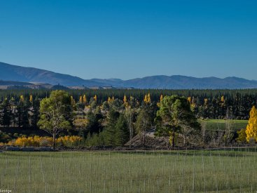 Luna Vineyard, Autumn in Bannockburn