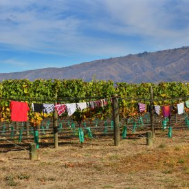 Laundry day, Mondillo Vineyard